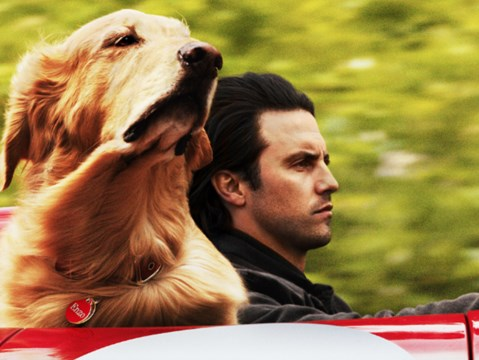 Kevin Costner voices a dog in the uplifting first trailer for The Art of Racing in the Rain